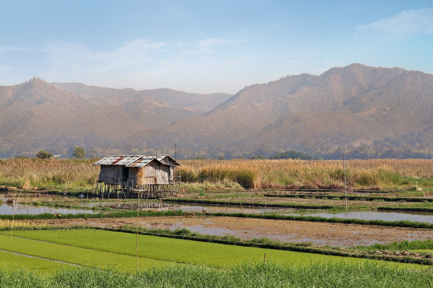 rizière sur le lac Inlé
